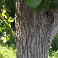 Tree hugging for health