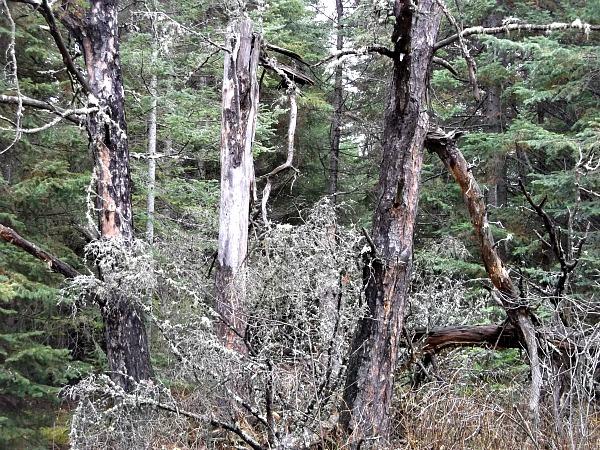 Dead tree rev2